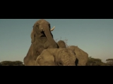 Слоны мои друзья (Братья из Гримсби) ПРИКОЛ ИЗ ФИЛЬМА