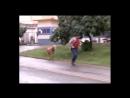 Баран атакует Нападение барана на людей Баран-хулиган