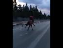 больше на лошадь не сядет
