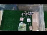 Выставка Экзотикум, экспозиция Nika Gecko