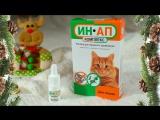 Как обработать кошку каплями на холку ИН-АП комплекс