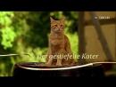 Кот в сапогах (2009)