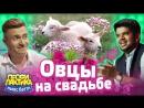 Овцы на свадьбе! - Выпуск 16 - Ньюс-Баттл Профилактика