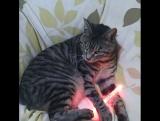 Кошка и лайтстик Тохошинки (cr.: pom_amesho)