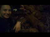 Бордосские щенки и море ласки