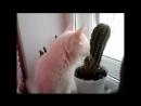 Памяти моего кота Яши посвящается