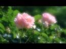 Массне-Таис:Размышления на фоне цветов (скрипка)