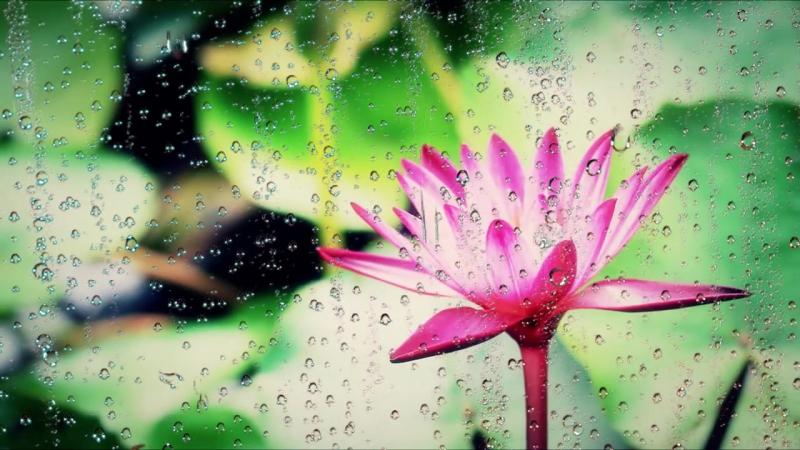 Магический звук дождя...