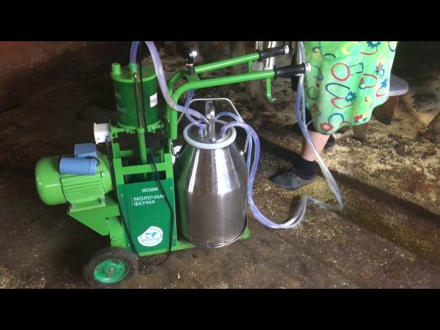 Доение коров нашим Доильным аппаратом Молочная Ферма 2П