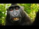 Профессиональные воры Обезьяны Professional thieves Monkey Подборка от Funny channel