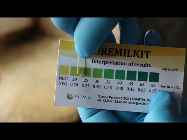 Как определить мочевину в молоке? A quick test of milk urea