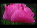 Музыкотерапия - Вальс дождя Шопен