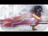 How DOGS use SUPER POWERS? Try not to laugh or grin on this funny animal video!