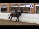 BALTOZAR 2012 dressage stallion
