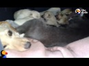 Dog And Cat Share Shelter To Keep Their Babies Warm Together   The Dodo