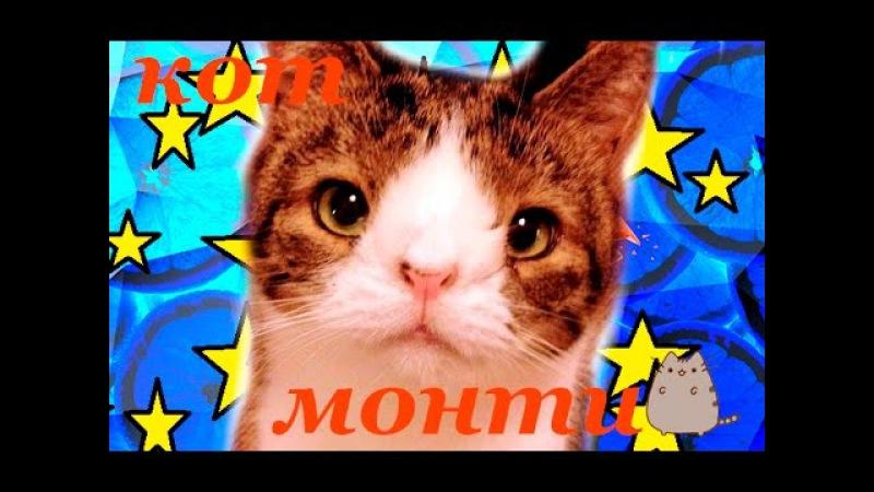 Кот с синдромом Дауна