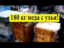 180 кг меда с улья ✅ На пасеке Ивана Мовчана Миргород 🐝