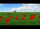 Весеннее настроение / Spring Mood. - Romantic Instrumental Music (Piano, Saxophone, Guitar)
