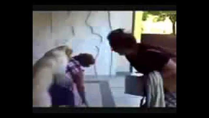 собака с голодухи напрыгнула на хозяйку pjos seksa zahotel смотреть онлайн без регистрации