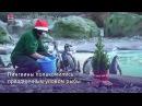 Лондонский зоопарк поздравил животных с наступающим Рождеством