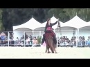 Девушка и Конь танцует лезгинку. О Женском и Мужском