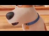 Тайная жизнь домашних животных Новые мультики 2017 HD смотреть онлайн мультфильмы