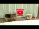 СМЕШНОЕ ВИДЕО ПРО КОШЕК 2017 FUNNY VIDEOS ABOUT CATS 2016