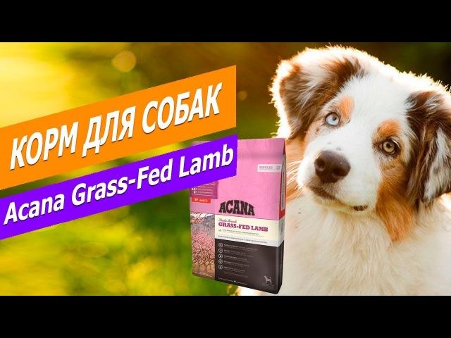 Корм Acana Grass-Fed Lamb с ягненком для собак | Обзор Корма Acana Grass-Fed Lamb