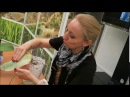 Болезни орхидей Марина Федорина