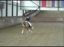 Дуаг - Шаэльезда для лошадей 5 лет Duag - Shael , 5 years