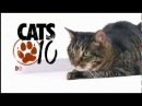 Кошки британ короткошерстная американ бобтейл ла перн девон рекс домашняя короткошерстная