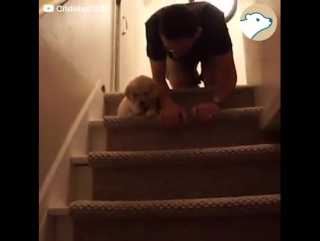 This puppy learning how to use the stairs has the...🐕