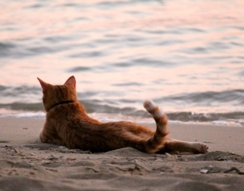 То чувство, когда даже котики отдыхают на