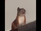 Белка издает странные звуки