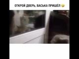 Кот научился говорить