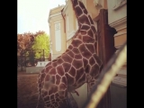 Одиночество в зоопарке ...