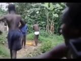 Африканское пати