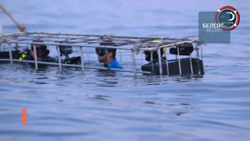 Майкл Фэпс супраць акулы!