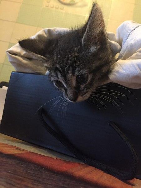 #подписчики  Друзья! Кому котеечку?!)))  Очень хороший кот, мальчик ,
