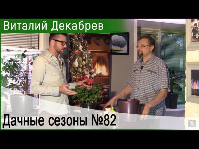 Дачные сезоны с Виталием Декабревым 2 декабря 2017 82