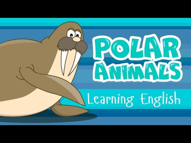 POLAR ANIMALS for kids