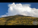 Nature Relaxation w/ Music Golden Aspen Meadow - 10 Minutes in a Fall Forest 720p HD