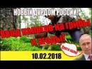 НОВЫЙ ДУРДОМ В РОССИИ НАЛОГ НА ГРИБЫ И ЯГОДЫ 10 02 2018