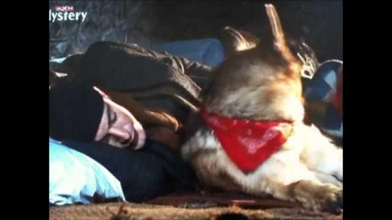 Watch the Kommissar REX with my German Shepherd