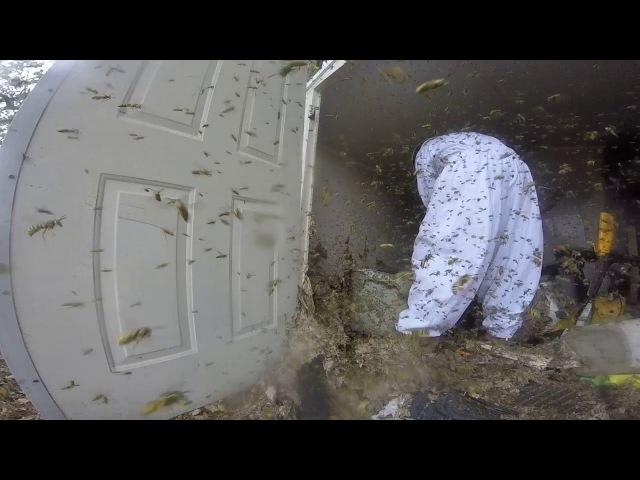 Massive Hornet Nest Removal