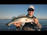 Итоги РОЗЫГРЫША Aspro. Ловля судака. Оснащение силиконового червя - Fishing Today