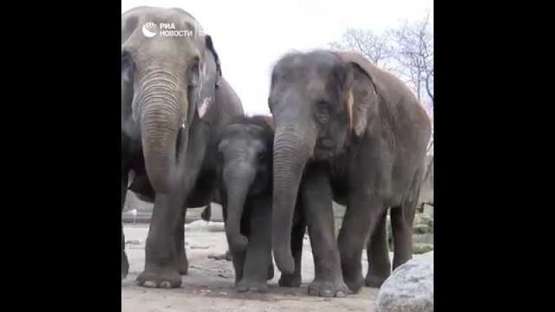 День рождения слоненка