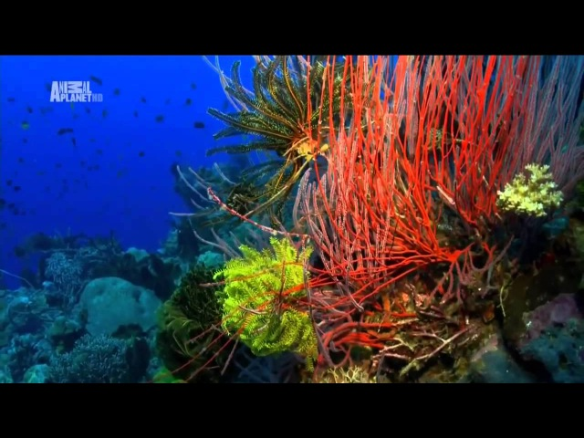 Чудеса голубой планеты - Австралия и Океания xeltcf ujke,jq gkfytns - fdcnhfkbz b jrtfybz