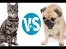Кошки VS собаки. Противостояние 1.