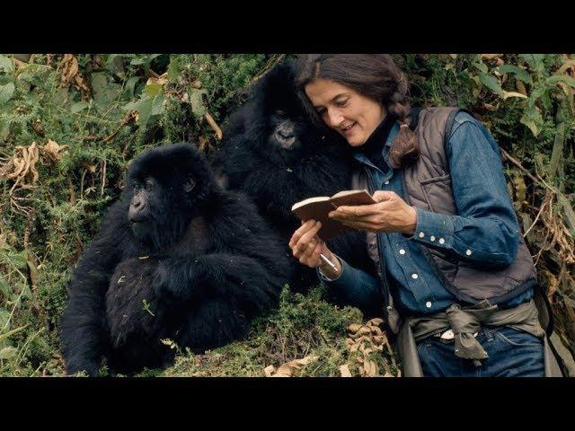 Дайан Фосси: Секреты в тумане 1 серия. Защитница горилл (2017)